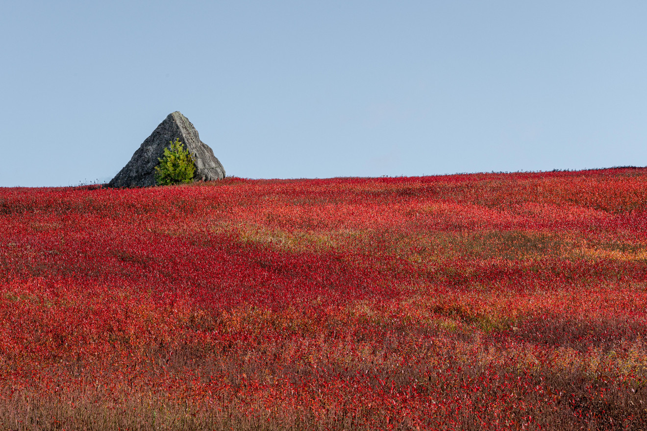 Autumn Blueberry Fields