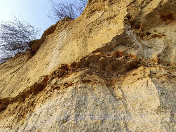 Fosszília