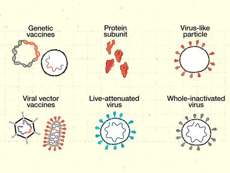 Vakcina, parizer