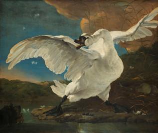 Jan Asselijn – The threatened Swan