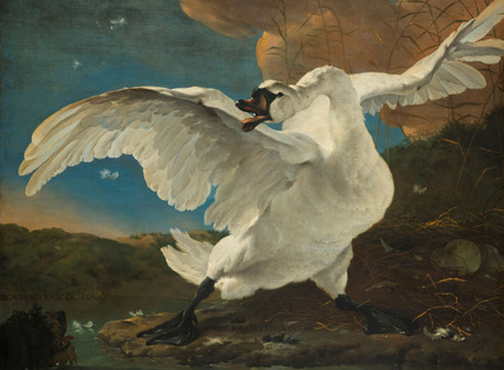 Jan Asselijn: The threatened Swan