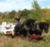 Horse drawn Wagon Ride