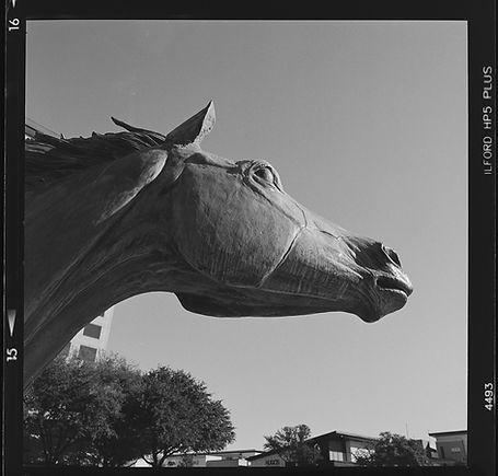 Hasselblad 500cm Ilford HP5 black and white film las colinas horse statue medium format film test
