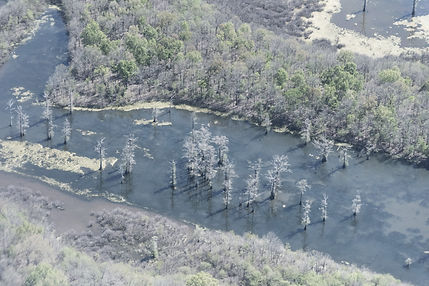 Swamp in Mississippi viewed from helicopter on ferry flight