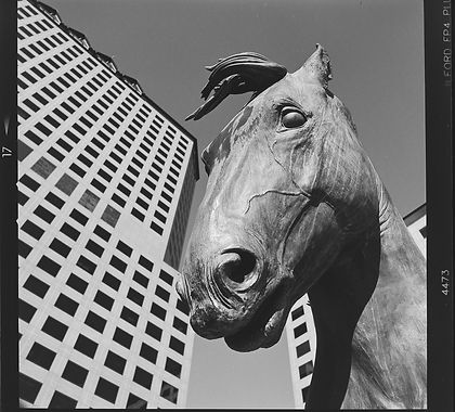 Hasselblad 500cm image of Las Colinas horses taken on Ilford HP5+ black and white film