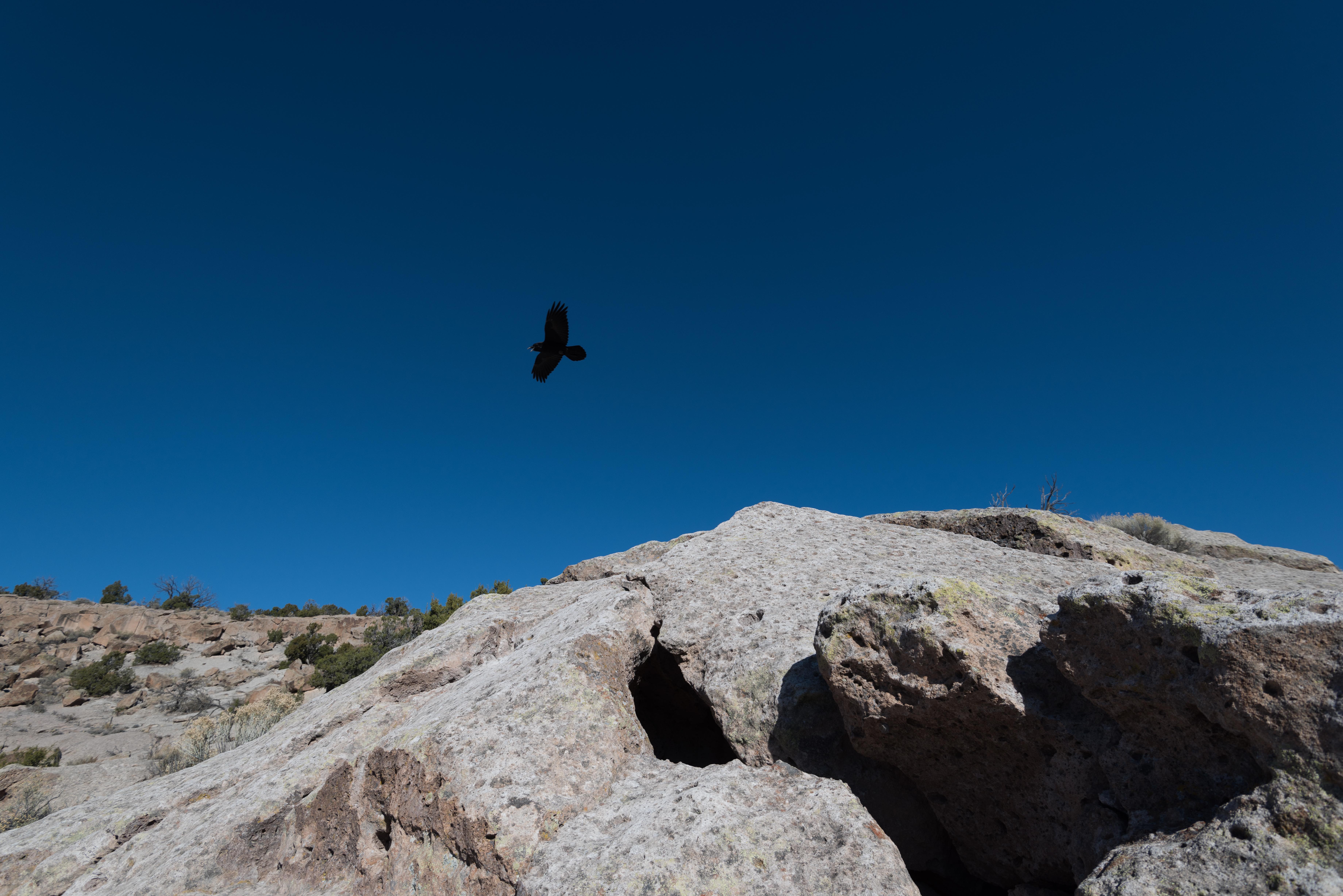 Eagle flies above NM canyon