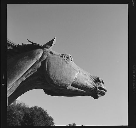 Hasselblad FP4 horse profile view-1.jpg