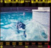 Black Lab swimming shot on FujiColor 200 35mm coke can camera