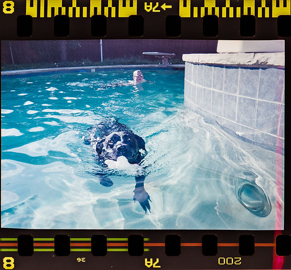 Black Lab swimming shot on FujiColor 200 35mm coke can camera