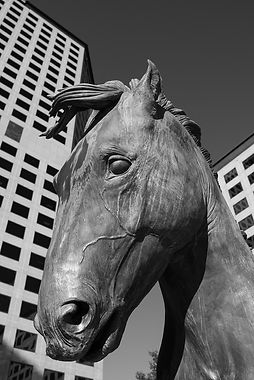 digital photo of Las Colinas horse statue from Nikon D810 in black and white
