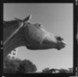 Hasselblad Delta 400 Hasselblad 500cm Ilford HP5 black and white film las colinas horse statue medium format film test horse profile view