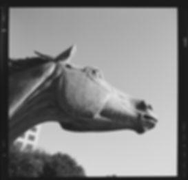 Hasselblad Delta 100  horse profile view