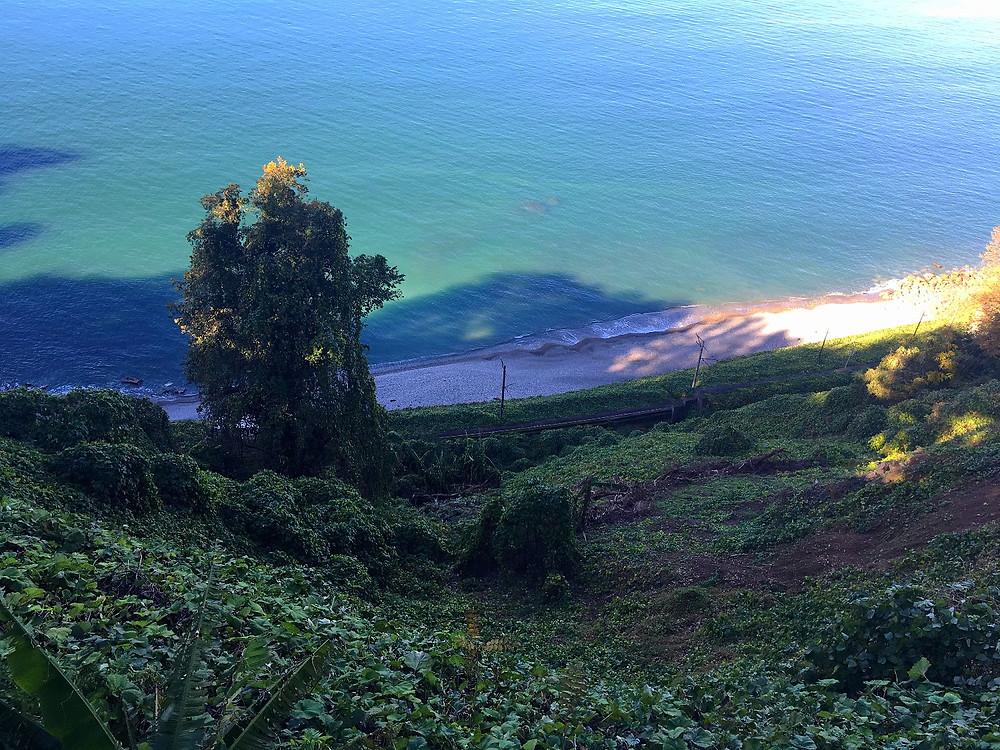 batumi botanical gardens sea view