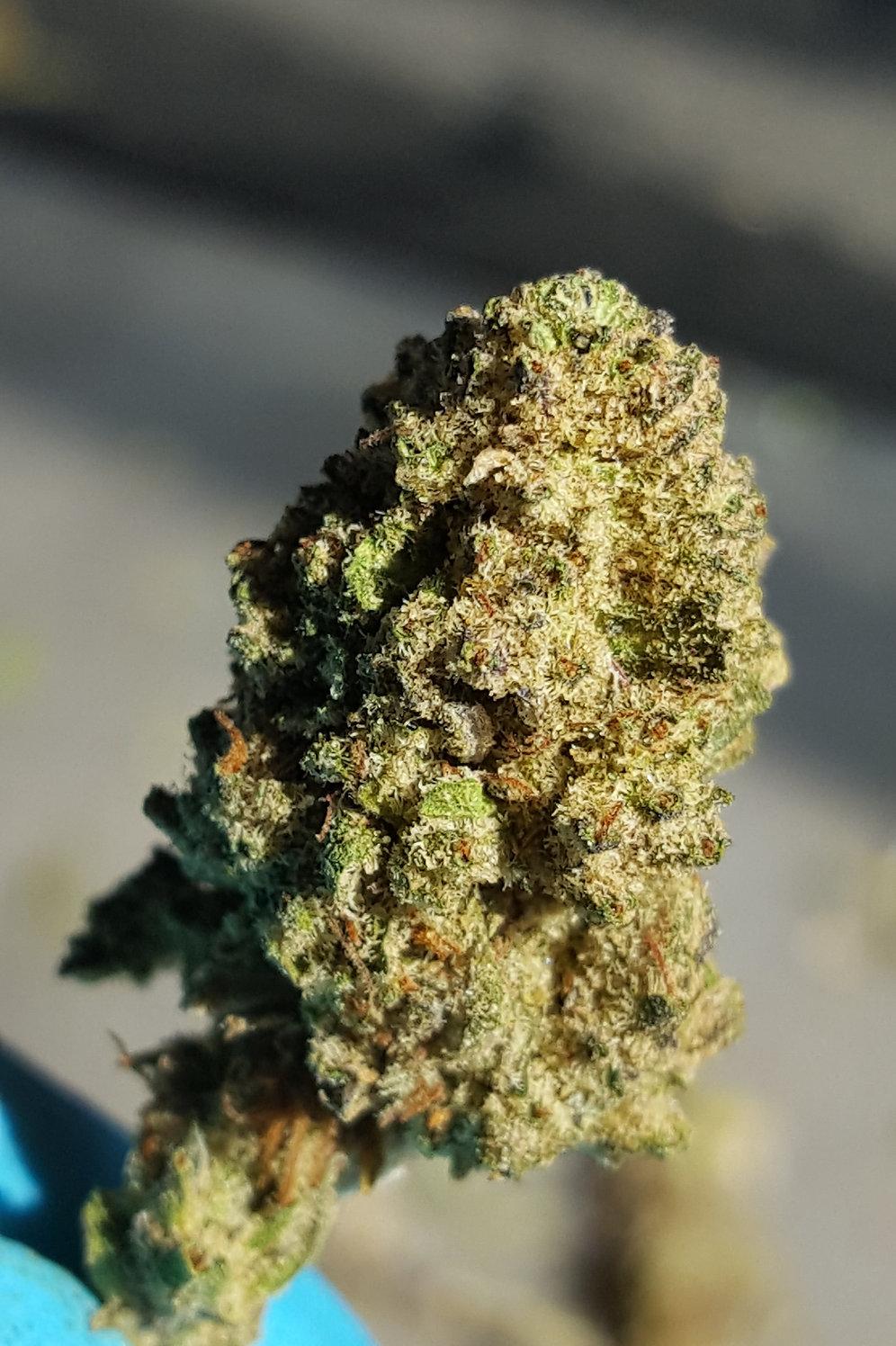 MURPHY MEDLEY FLOWER - 3 5 Grams
