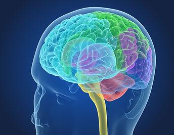 xray_brain_anatomy_with_inner_structure_