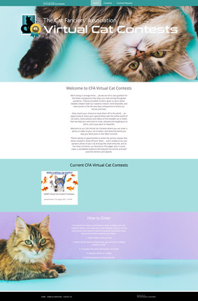 Cats Federation photo competition