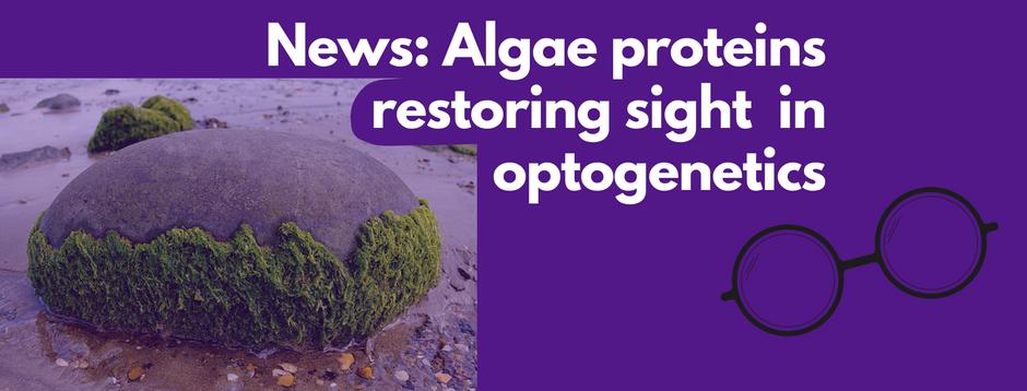 News: Algae proteins partially restore sight