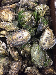 Fanny-Bay-Oysters.jpg