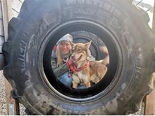 Abenteuerlabyrinth_Hundetag1.jpg
