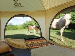 馬と泊まろう!ホースキャンプ