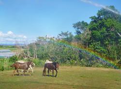 馬にかかる虹