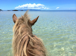 馬の上から見る西表島