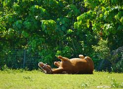芝生でごろ~ん!