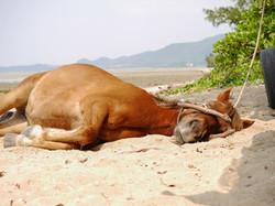 ビーチでお昼寝