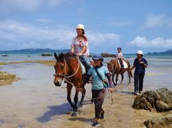 手軽に楽しめる引き馬コース