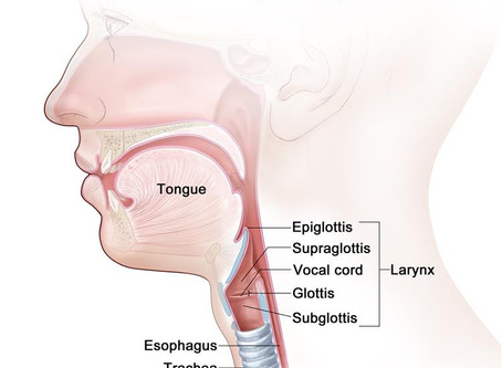 An Introduction to Vocal Chord Paralysis