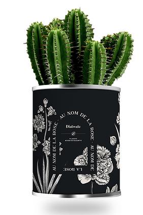 """Plante en pot """"AU NOM DE LA ROSE"""""""