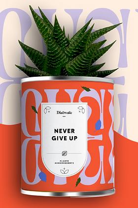"""Plante en pot """"Never Give Up"""""""