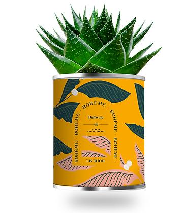 """Plante en pot """"BOHEME """""""