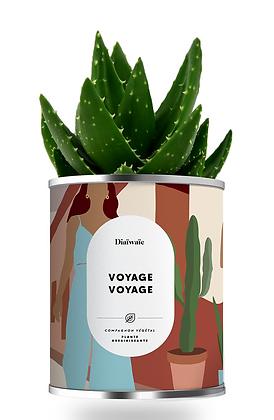 """Plante en pot """"Voyage Voyage """""""