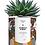 """Thumbnail: Plante en pot """" Family First"""""""