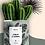 """Thumbnail: Plante en pot """"Coeur à Corps"""""""
