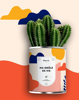 "Plante en pot ""Ma Drôle de vie"""