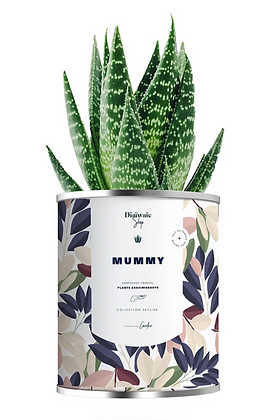 "Plante en pot "" Mummy"""
