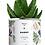 """Thumbnail: Plante en pot """"DADDY"""""""