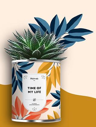 "Plante en pot ""Time of my Life"""