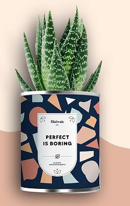 """Plante en pot """"Perfect is Boring"""""""