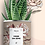 "Thumbnail: Plante en pot ""Viens on sème"""