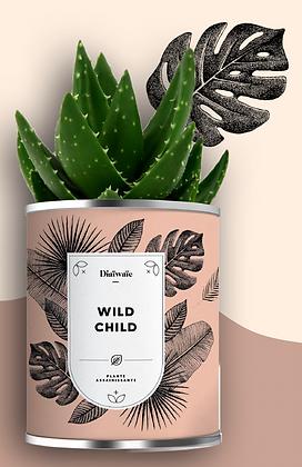 """Plante en pot """"Wild Child"""""""