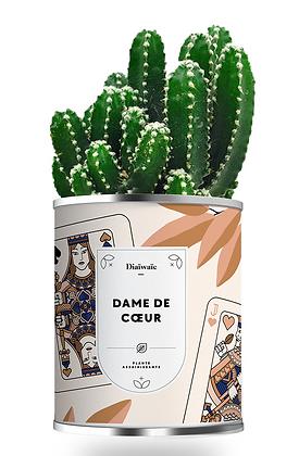 """Plante en Pot """"DAME DE COEUR  """""""