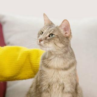 Meow Mix | Knit Ssweaters
