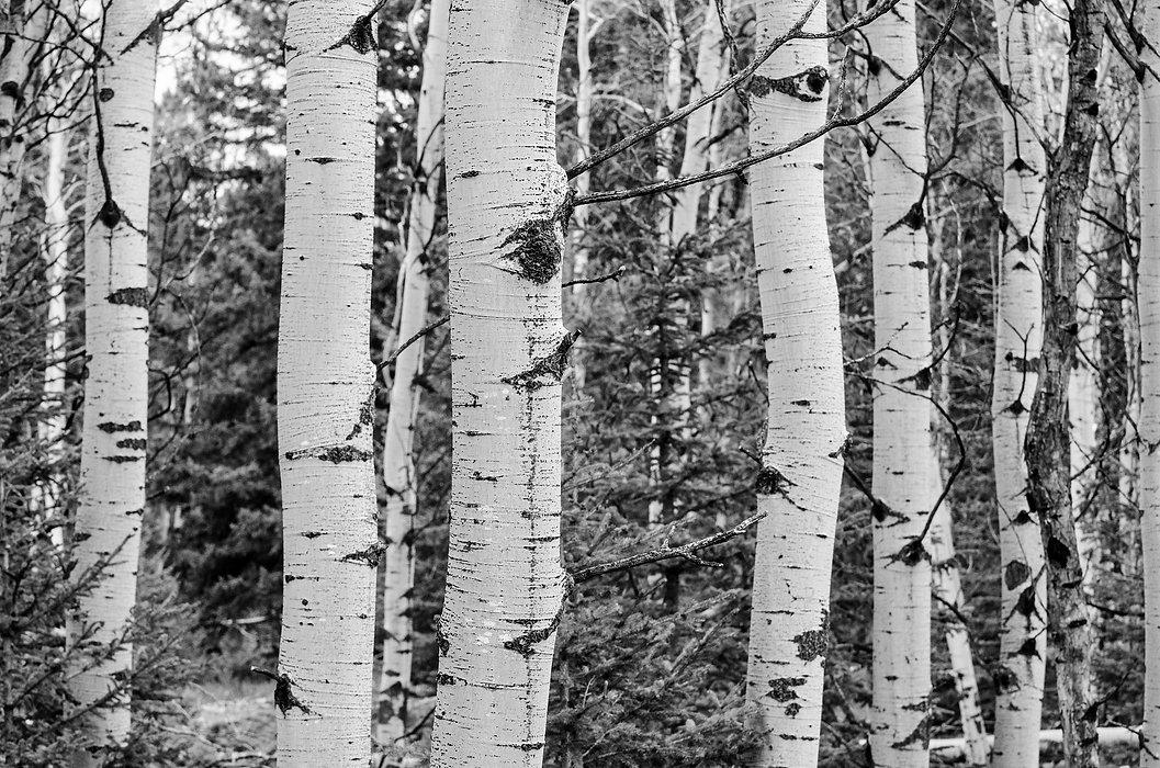 tree-grove-1130772_1920.jpg