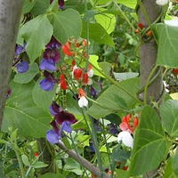 What to do in the garden now - jobs for the garden in March