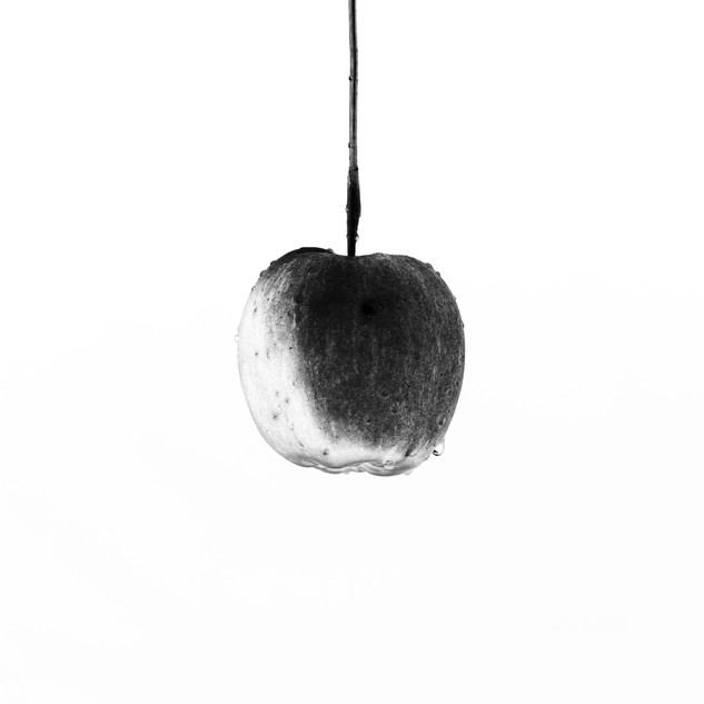 The Hanging Apple