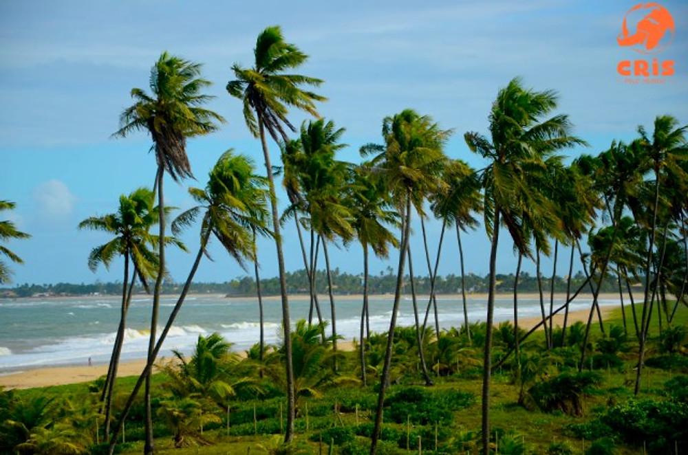 litoral norte da bahia b blue beach houses cris stilben crispelomundo  (3)