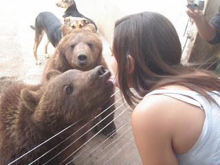 Zoo Lujan Buenos Aires Argentina Beijando urso
